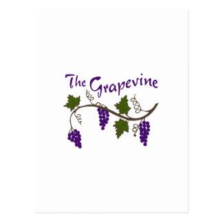 THE GRAPEVINE POSTCARD