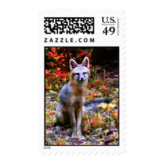 THE GRAY FOX STAMP