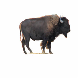 The Great American Bison Photo Cutouts
