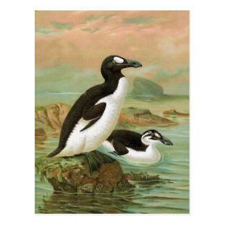 The Great Auk Vintage Bird Illustration Postcard