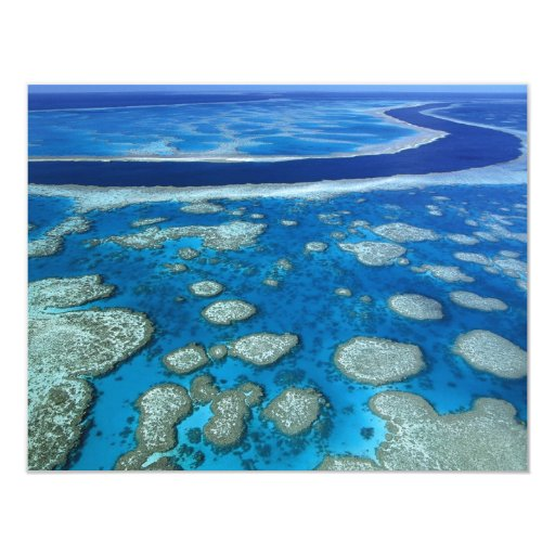 The Great Barrier Reef Card