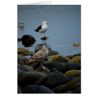 The Great Black-backed Gull Card