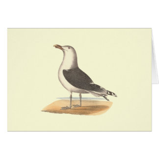 The Great Black-backed Gull(Larus marinus) Card
