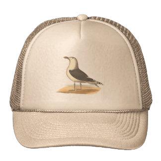 The Great Black-backed Gull(Larus marinus) Hats