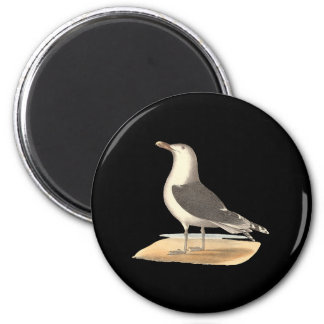The Great Black-backed Gull(Larus marinus) Fridge Magnet