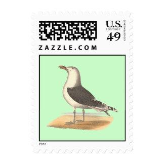 The Great Black-backed Gull(Larus marinus) Stamp