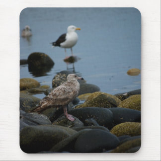The Great Black-backed Gull Mousepad