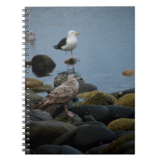 The Great Black-backed Gull Notebook