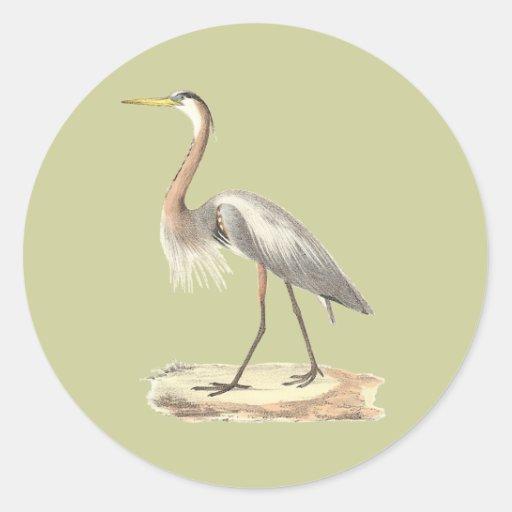 The Great Blue Heron  (Ardea herodias) Classic Round Sticker