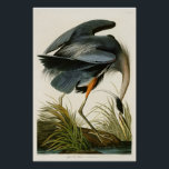"The Great Blue Heron John Audubon Birds of America Poster<br><div class=""desc"">The Great Blue Heron John Audubon Birds of America</div>"