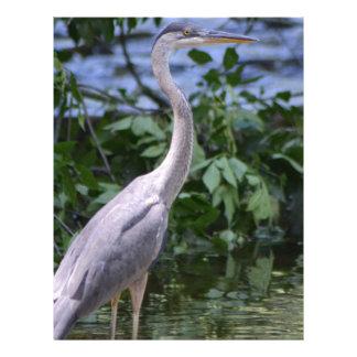 The Great Blue Heron Letterhead