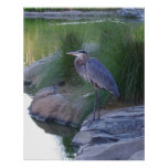 The Great Blue Heron Posters