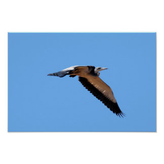 The great blue herons big stretch in the sky poster