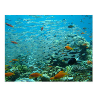 The Great coral barrier in Australia Postcard