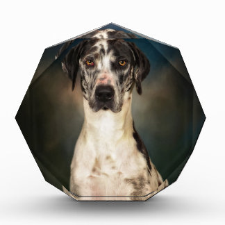 The Great Dane Award