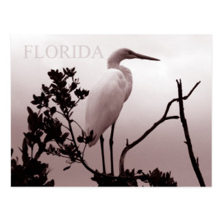The Great Egret - Florida Keys Postcard