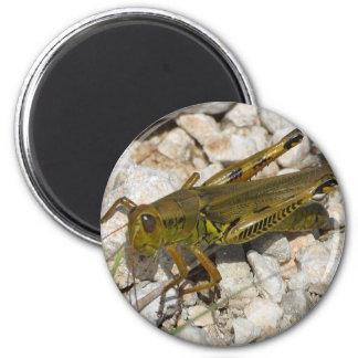 the Great Grasshopper  ! 2 Inch Round Magnet