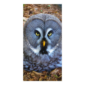 The Great Grey Owl Strix Nebulosa Lapland Owl Card