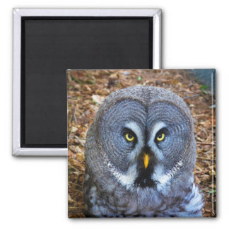 The Great Grey Owl Strix Nebulosa Lapland Owl Magnet