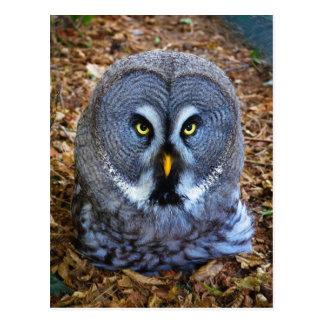 The Great Grey Owl Strix Nebulosa Lapland Owl Postcard