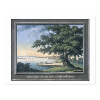 The Great Tree of Kingston with a view of Philadel Postcard
