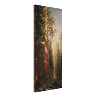 The Great Trees, Mariposa Grove, CA by Bierstadt Stretched Canvas Print