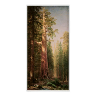 The Great Trees, Mariposa Grove, California Poster
