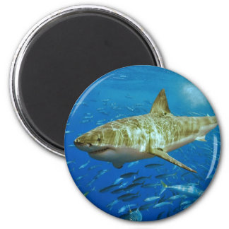 The Great White Shark Carcharodon Carcharias 2 Inch Round Magnet