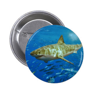 The Great White Shark Carcharodon Carcharias Button