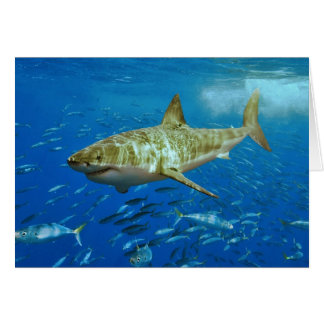 The Great White Shark Carcharodon Carcharias Greeting Card