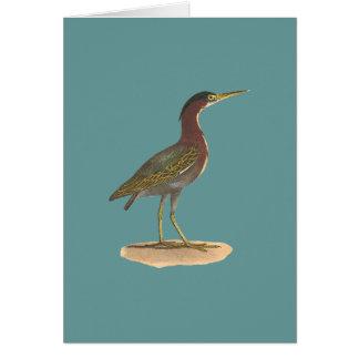 The Green Heron, or Poke (Ardea virescens) Greeting Card
