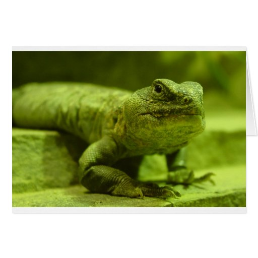 The Green Lizard Greeting Cards