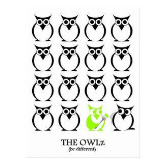 The green Owl Postcard