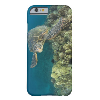 The Green Sea Turtle, (Chelonia mydas), is the 2 Barely There iPhone 6 Case
