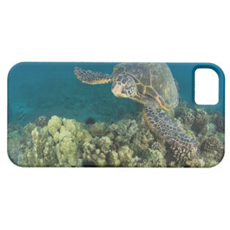 The Green Sea Turtle, (Chelonia mydas), is the 2 iPhone 5 Case