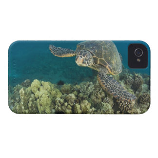 The Green Sea Turtle, (Chelonia mydas), is the 2 iPhone 4 Case