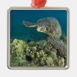 The Green Sea Turtle, (Chelonia mydas), is the 2 Square Metal Christmas Ornament