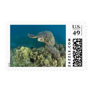 The Green Sea Turtle, (Chelonia mydas), is the 2 Postage