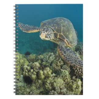 The Green Sea Turtle, (Chelonia mydas), is the 2 Spiral Notebooks