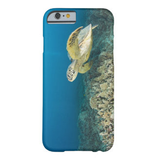 The Green Sea Turtle, (Chelonia mydas), is the 3 Barely There iPhone 6 Case