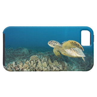 The Green Sea Turtle, (Chelonia mydas), is the 3 iPhone 5 Case