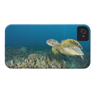 The Green Sea Turtle, (Chelonia mydas), is the 3 Case-Mate iPhone 4 Case