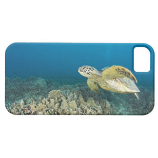 The Green Sea Turtle, (Chelonia mydas), is the 3 iPhone SE/5/5s Case