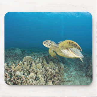 The Green Sea Turtle, (Chelonia mydas), is the 3 Mousepads