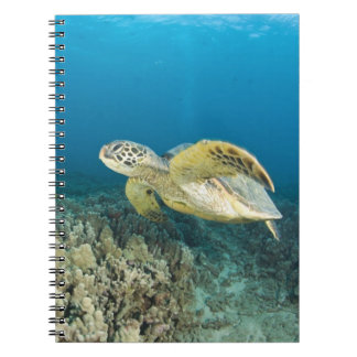 The Green Sea Turtle, (Chelonia mydas), is the 3 Notebooks