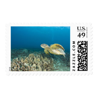 The Green Sea Turtle, (Chelonia mydas), is the 3 Postage