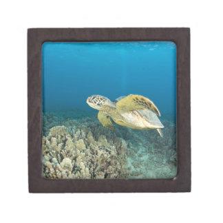 The Green Sea Turtle, (Chelonia mydas), is the 3 Premium Gift Boxes