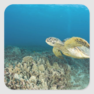 The Green Sea Turtle, (Chelonia mydas), is the 3 Square Sticker