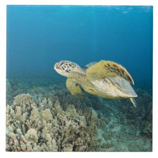 The Green Sea Turtle, (Chelonia mydas), is the 3 Ceramic Tiles