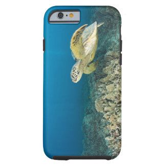 The Green Sea Turtle, (Chelonia mydas), is the 3 Tough iPhone 6 Case